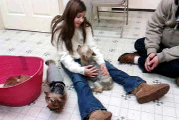 Mary, retired Yorkie with Kaylee